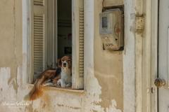 Zakynthos -  Oplettende hond  -2