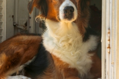 Zakynthos -  Oplettende hond  -6