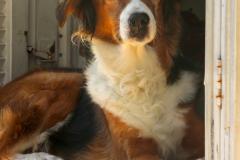 Zakynthos - Domestic dog  -6
