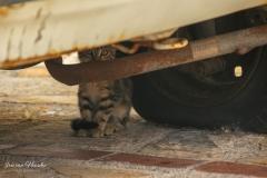 Zakynthos - Here kitty kitty
